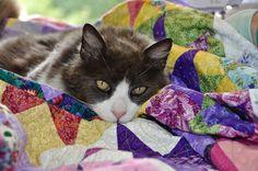LuAnn Kessi: Machine Quilting.....with Ralph the Cat