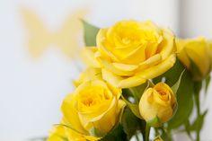 yellow rose - Pesquisa Google