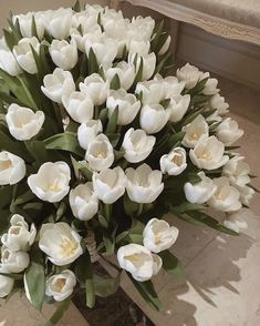 No Rain No Flowers, My Flower, Beautiful Flowers, White Tulips, White Flowers, Spring Flowers, Luxury Flowers, Flower Aesthetic, Aesthetic Pics