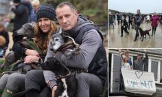 Mark Woods stole the nation's heart after he appealed for fellow dog lovers to join him on his last walk with Walnut (pictured), the 18-year-old whippet he has had since a puppy.
