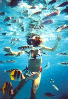 I will swim with the fishes in Bora Bora...alive :-)