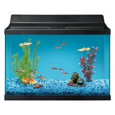 Great choice 20 gallon aquarium starter kit petsmart 60 for 20 gallon fish tank petsmart