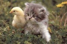 animali teneri