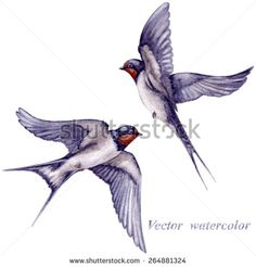 Find Watercolor Two Flying Swallows Isolated On stock images in HD and millions of other royalty-free stock photos, illustrations and vectors in the Shutterstock collection. Thousands of new, high-quality pictures added every day. Barn Swallow Tattoo, Swallow Tattoo Design, Swallow Bird Tattoos, Golondrinas Tattoo, Brother Tattoos, Sparrow Tattoo, Nature Drawing, Black And Grey Tattoos, Tattoo Designs Men