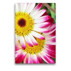 Gartenimpression Der Handel, Mood, Plants, Marriage Anniversary, Flowers, Creative, Plant, Planets