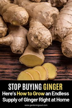 As one of the oldest and most delicious spices ginger is not only tasty but full of health benefits! As one of the oldest and most delicious spices ginger is not only tasty but full of health benefits! Home Vegetable Garden, Fruit Garden, Edible Garden, Regrow Vegetables, Organic Vegetables, Growing Veggies, Growing Herbs, Organic Gardening, Gardening Tips