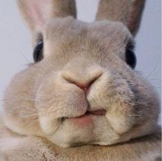Bunny - https://instagram.com/p/3_asrAo3rK/?taken-by=spittyjsquirrel