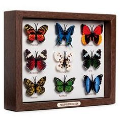 Memo Board Push Pins Set of 9 Butterfly Shaped Pushpins in a Collector's Box (Baby Product)  http://www.99homedecors.com/  B005FO8R56