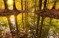 Vijf tips voor betere bosfoto's | Cursussen | Zoom.nl