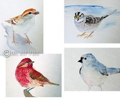 Songbird Note Cards Colorful Bird Watercolor Paintings Greeting Cards Original Fine Art Birds Set of 5 Cards Goldfinch Purple Finch Sparrows Five songbirds are showcased in this set of five blank greeting cards. They are from my original watercolor paintings and include a Goldfinch, a Purple Finch, a Titmouse, a Chipping Sparrow, and a White-Throated Sparrow. The note cards measure 4 1/4 x 5 1/2 and are on matte cardstock, a very nice quality. They are blank inside with room for your…