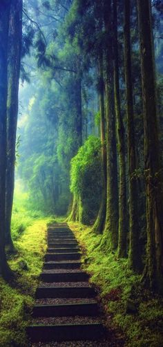 'Keep on hiking' Climbing, fog, forest, Taoyuan, Taiwan by Hanson Mao.