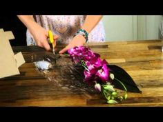 Caring for your Dendrobium Orchids - Orchid Care