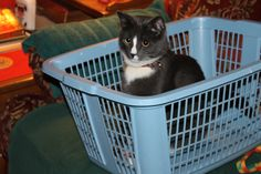 Basket Case! » Dusty Duder » photo by cure_kitty