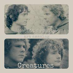 The Hobbits