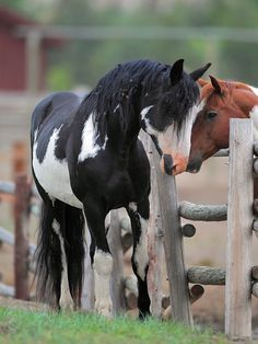 Gods most beautiful animals! Most Beautiful Animals, Beautiful Horses, Beautiful Creatures, Beautiful Gorgeous, Zebras, Horse Pictures, Animal Pictures, Cheval Pie, Majestic Horse