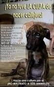 Resultado de imagen para animales tiernos con frases no al maltrato animal