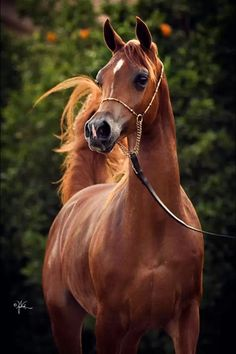 The most beautiful creature on earth is the Horse❤️✨