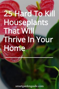 25 beautiful houseplants that anyone can look after. These resilient houseplants don't mind a little neglect from time to time. Even better, they look amazing too. Easy Care Indoor Plants, Indoor Flowering Plants, Blooming Plants, Purple Shamrock, Snake Plant Care, Cast Iron Plant, Umbrella Tree, Kitchen Plants, Lower Lights