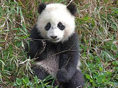 Bao Bao | Flickr - Photo Sharing!