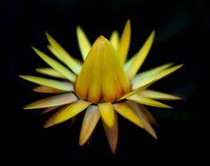 Amazing Star by Susan Chan: Fine Art Photography #photography #amazingpics http://alldayphotography.com