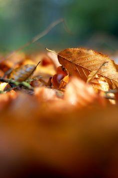 Im Laub // Among the leaves