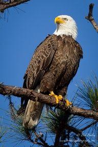 Beautiful Eagle!