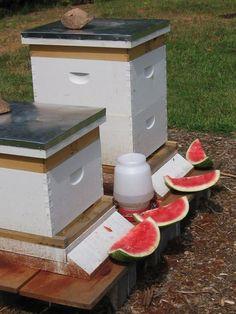Photo: FYI - The red stuff isn't dirt- it is cinnamon...it repels ants #beekeepingbusiness