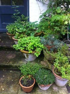 Herbs.#garden decorating before and after #garden designs #garden interior design