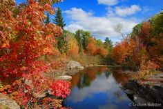 Fall in New Brunswick, Canada. Makes me think of my cousins who I adore!