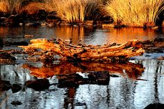 The Mooi River, KZN Midlands