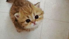 tiny meow http://ift.tt/2b3NYSG