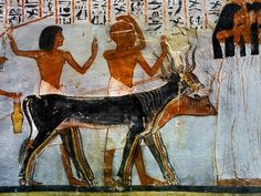 Painting of oxen and mourners from the Tomb of Roy Egypt