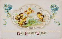 Easter Chicks John Winsch Antique Illustration Digital Image Download, Victorian Hatchlings Blue Flowers, Vintage Postcard Instant Download