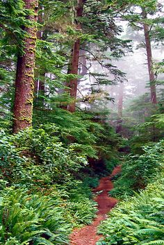 West Coast Trail, BC, 47 miles of challenging hiking terrain. Places To Travel, Places To See, West Coast Trail, Forest Path, Happy Trails, Beautiful Places, Beautiful Forest, Fauna, Vancouver Island