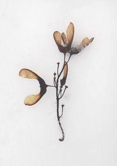 pacha-design.blogspot.com