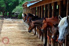I wish I owned one of these horses<3