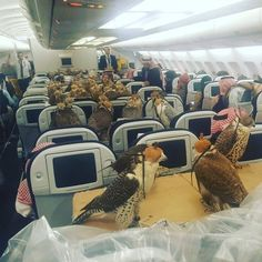 My captain friend sent me this photo. Saudi prince bought ticket for his 80 hawks. - #funny #lol #viralvids #funnypics #EarthPorn more at: http://www.smellifish.com
