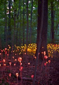 fairies decorate the enchanted forest