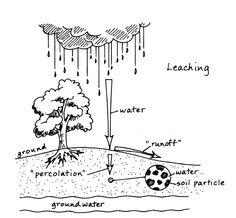 Leaching: when too much water is washing away important minerals in your soil that your plants use as food. Make sure you're fertilizing after all this heavy rain!