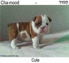 Chamood Cute (from Hebrew word of the day)