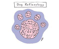 Dog Reflexology Cartoon | Reader's Digest