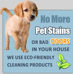 Richmond Texas, Eco Friendly Cleaning Products, Steam Cleaners, How To Clean Carpet