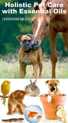 awesome pics: Holistic Pet Care with Essential Oils