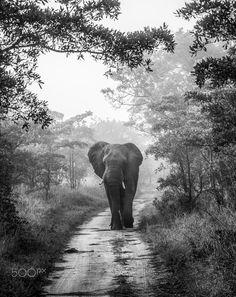 MOODY WALK by Jaco Marx on 500px