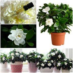 zimmerblumen topfpflanzen bluhende zimmerpflanzen
