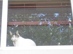 my life on the e-list: the sofl snapshots: window sitting