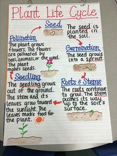 13 Creative Ways to Teach Plant Life Cycle is part of Science Biology Life Cycles - Teaching plant life cycle Check out these creative and easy ways to teach your students about growing a seed in the classroom Plant Science, Science Biology, Science Lessons, Science Education, Life Science, Science Projects, Science Experiments, Science Art, Biology Lessons