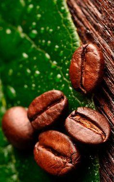 22 Best Coffee Beans Light Roast Whole Bean Coffee Beans Whole Dark Roast I Love Coffee, My Coffee, Coffee Drinks, Coffee Shop, Coffee Cups, Coffee Maker, Mini Desserts, Eight O Clock Coffee, Coffee Wiki