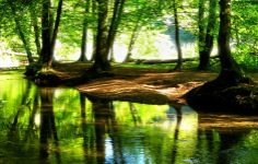 Green Nature Hd Wallpapers 1080p