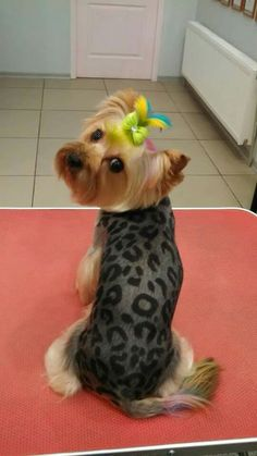-repinned- Cute creative dog grooming